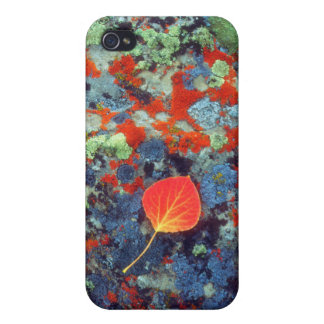 Aspen leaf on a lichen covered rock iPhone 4 case