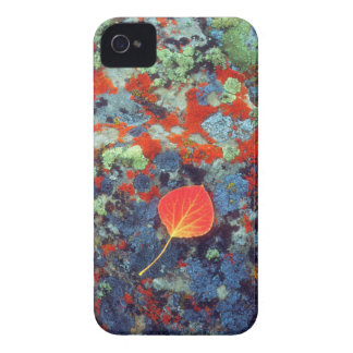 Aspen leaf on a lichen covered rock iPhone 4 Case-Mate cases