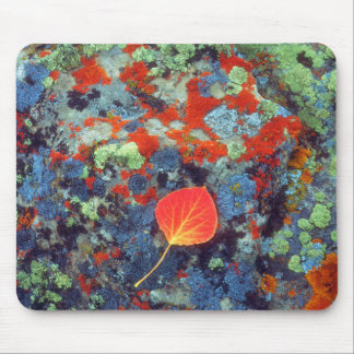 Aspen leaf on a lichen covered rock mouse mat