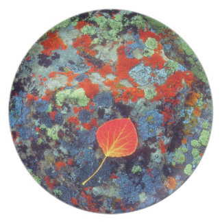 Aspen leaf on a lichen covered rock plate