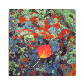 Aspen leaf on a lichen covered rock wood coaster