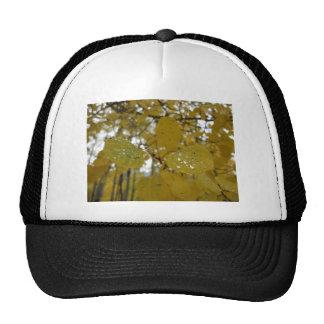 aspen leaves trucker hats
