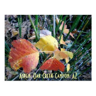 Aspen, Oak Creek Canyon, AZ Postcard