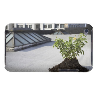 Aspen sapling on rooftop iPod Case-Mate case