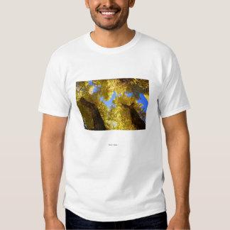 Aspen T-shirts