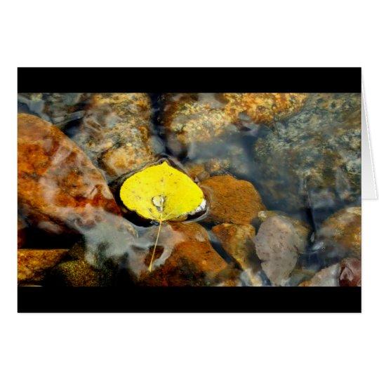 Aspen & the water drop blank card