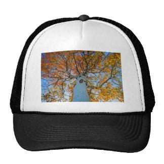 Aspen Tree Cap