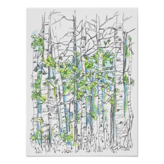 Aspen Tree Grove Pen and Ink Drawing Poster