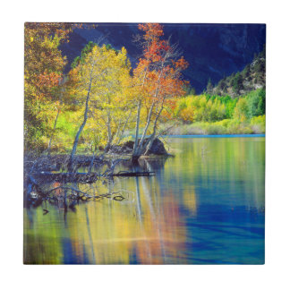 Aspen tree in autumn reflecting in Grant Lake Tile