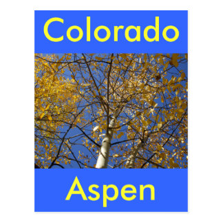 Aspen tree looking up through yellow leaves. postcard