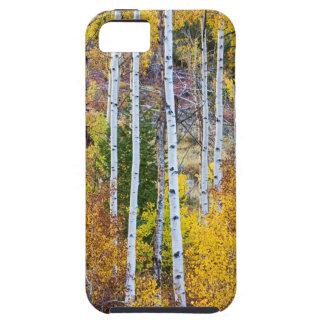 Aspen Tree Magic iPhone 5 Cover
