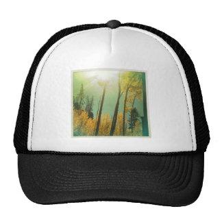 Aspen Trees Cap