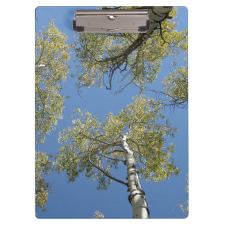 Aspen Trees Clipboard