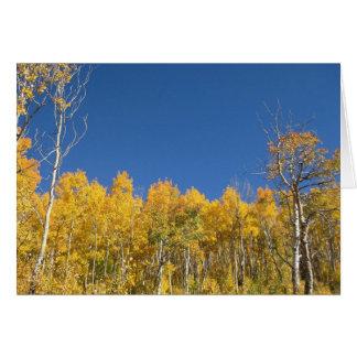 Aspen Trees Colorado Greeting Cards