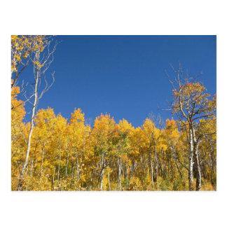 Aspen Trees Colorado Post Cards
