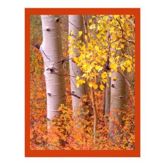 Aspen trees in Autumn 21.5 Cm X 28 Cm Flyer