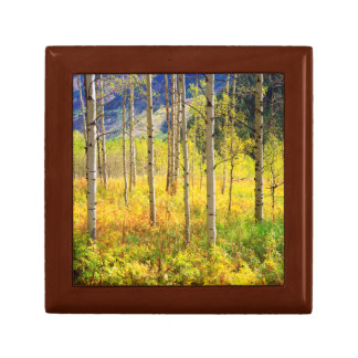 Aspen Trees in Autumn in the Rockies Gift Box