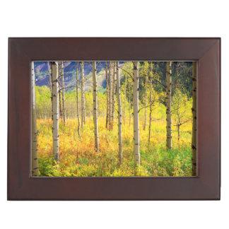 Aspen Trees in Autumn in the Rockies Keepsake Box