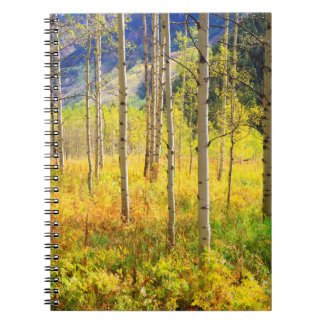 Aspen Trees in Autumn in the Rockies Notebook