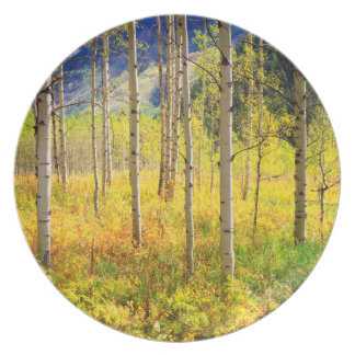 Aspen Trees in Autumn in the Rockies Plate