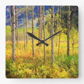 Aspen Trees in Autumn in the Rockies Square Wall Clock