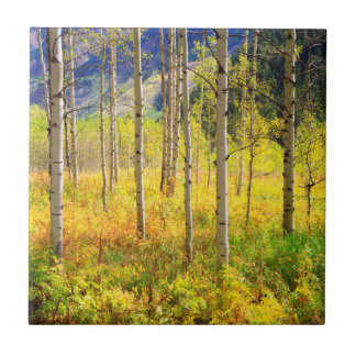 Aspen Trees in Autumn in the Rockies Tile