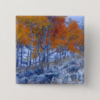 Aspen trees in Fall colors, Bighorn Mountains, 15 Cm Square Badge