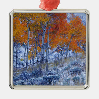 Aspen trees in Fall colors, Bighorn Mountains, Christmas Ornament