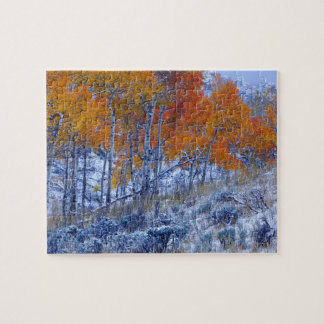 Aspen trees in Fall colors, Bighorn Mountains, Jigsaw Puzzle