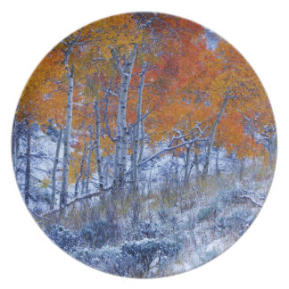 Aspen trees in Fall colors, Bighorn Mountains, Plate