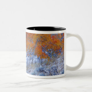 Aspen trees in Fall colors, Bighorn Mountains, Two-Tone Coffee Mug