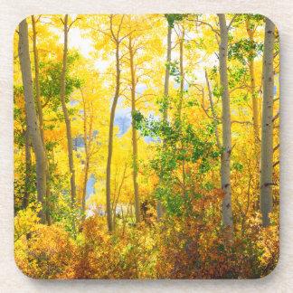 Aspen Trees In Fall | Sierra Nevada Mountains, CA Coaster