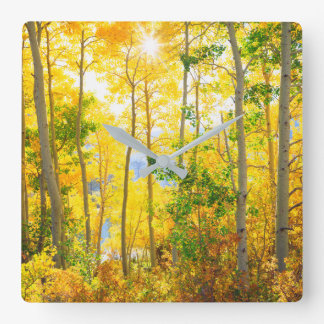 Aspen Trees In Fall | Sierra Nevada Mountains, CA Square Wall Clock