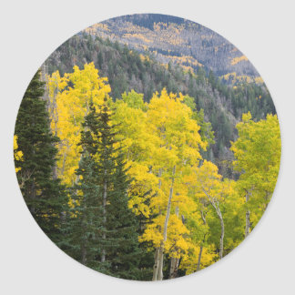 Aspen Trees (Populus Tremuloides) And Conifers 2 Round Sticker