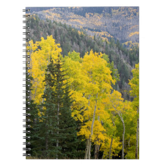 Aspen Trees (Populus Tremuloides) And Conifers 2 Spiral Notebook