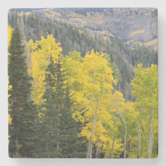 Aspen Trees (Populus Tremuloides) And Conifers 2 Stone Coaster