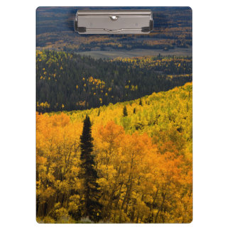 Aspen Trees (Populus Tremuloides) And Conifers Clipboards