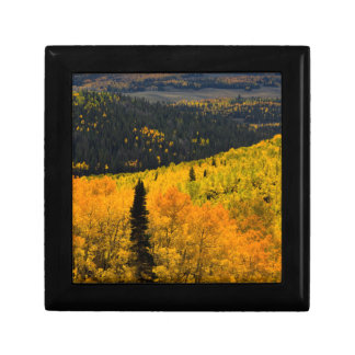 Aspen Trees (Populus Tremuloides) And Conifers Gift Box