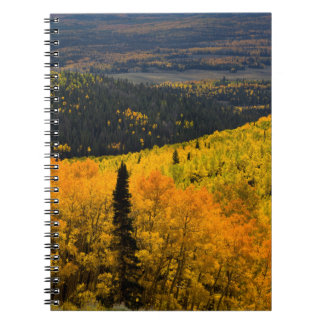 Aspen Trees (Populus Tremuloides) And Conifers Notebooks