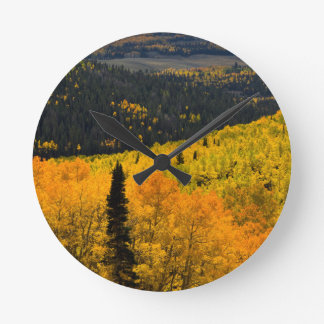 Aspen Trees (Populus Tremuloides) And Conifers Round Clock