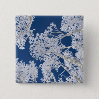 Aspen Trees with Snow 15 Cm Square Badge