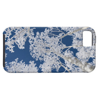 Aspen Trees with Snow Case For The iPhone 5