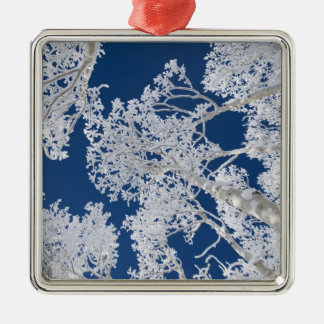 Aspen Trees with Snow Christmas Ornament