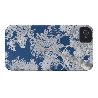 Aspen Trees with Snow iPhone 4 Cover