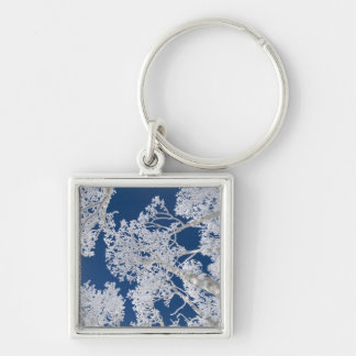 Aspen Trees with Snow Key Ring