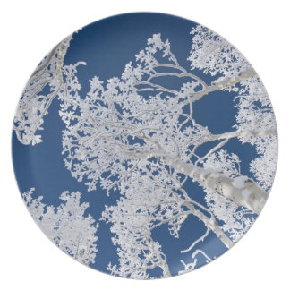 Aspen Trees with Snow Plate
