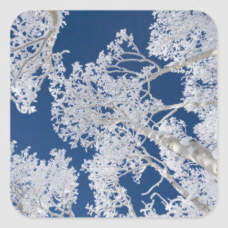 Aspen Trees with Snow Square Sticker