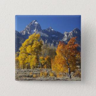 Aspen trees with the Teton mountain range 15 Cm Square Badge