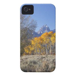 Aspen trees with the Teton mountain range 3 iPhone 4 Case-Mate Case