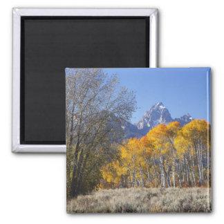 Aspen trees with the Teton mountain range 3 Magnet
